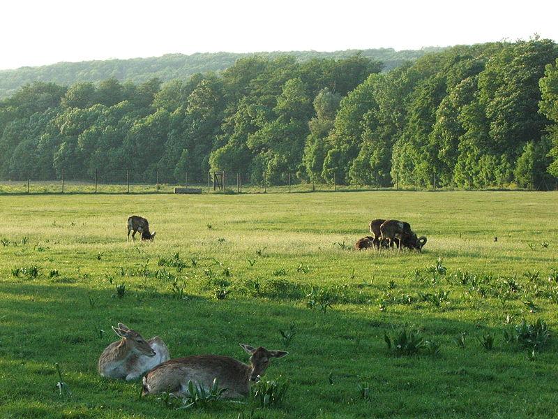 Lainzer Wildlife Park Vienna