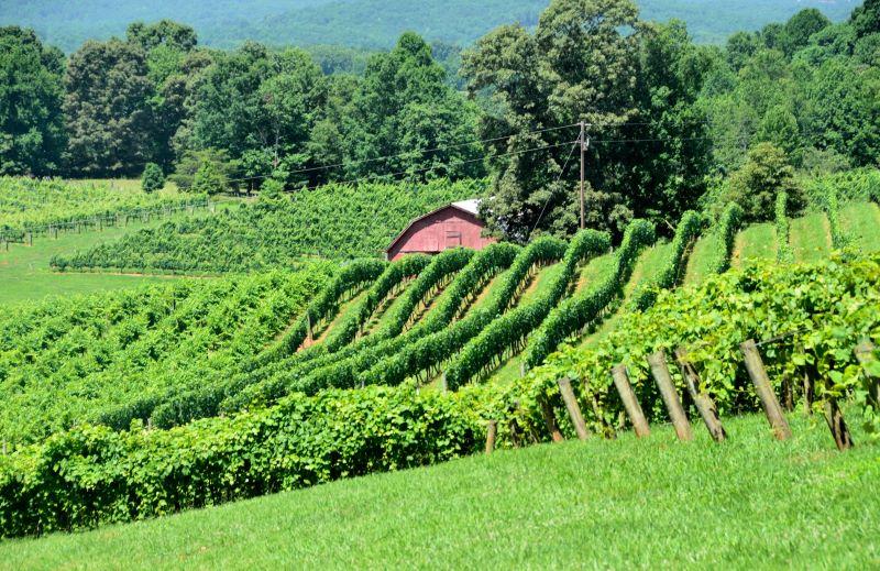 vineyards of north georgia usa